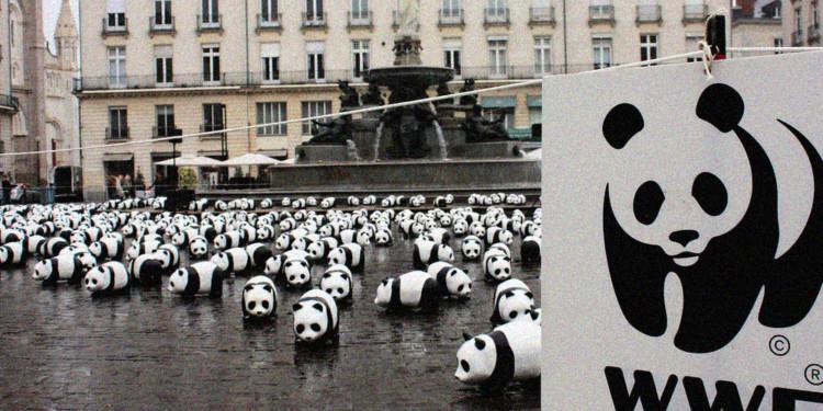 Consensys partners WWF for transparent philanthropy