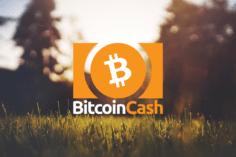 Bitcoin Cash Price: fall to $237