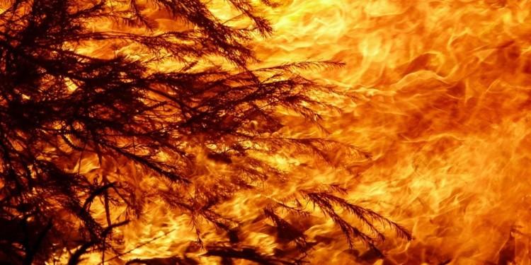 Binance makes BNB donations worth $1m to Australia bushfire victims