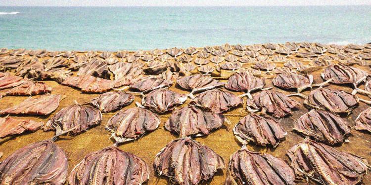 Blockchain can save Tuna population: WEF