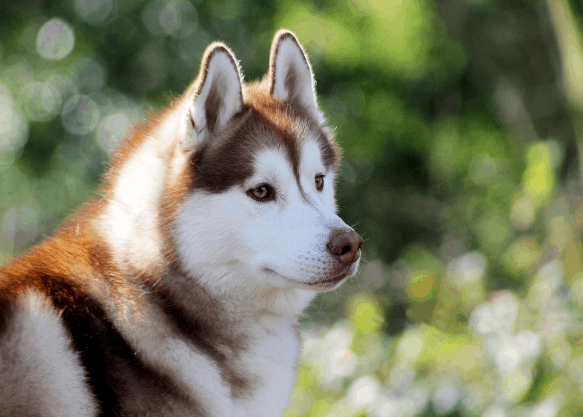 Dogecoin Price Prediction 2021 - 2025 | Cryptopolitan