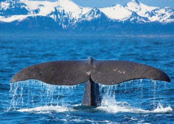 Whale dumps 2.5 million dollars to Chinese pool by mistake