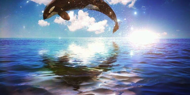 Ripple whale